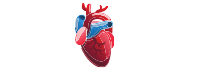 Cardiologists Cardiology